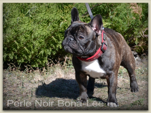 Perle Noir Bona-Lee