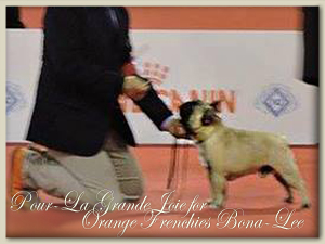 Pour-La Grande Joie for Orange Frenchies Bona-Lee