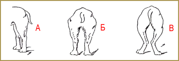 удиагностика суставов
